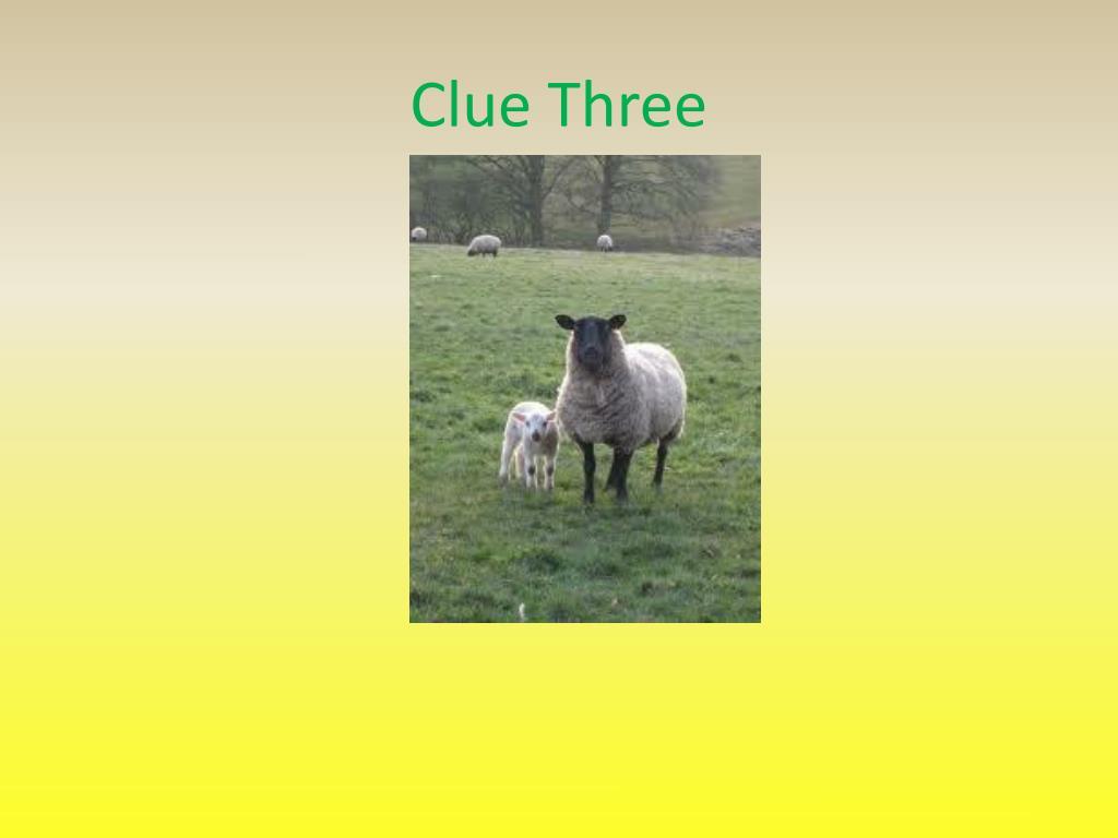 Clue Three