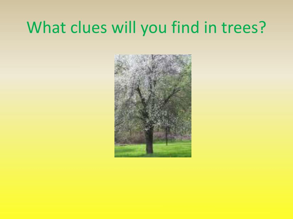 What clues will you find in trees?