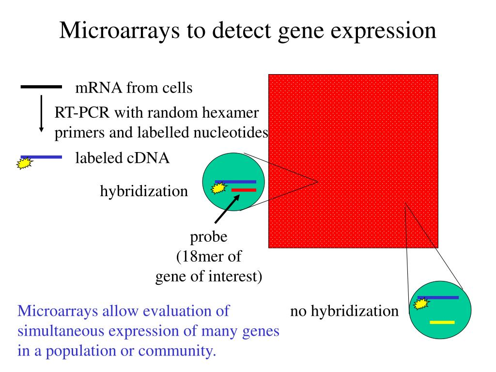 Microarrays to detect gene expression