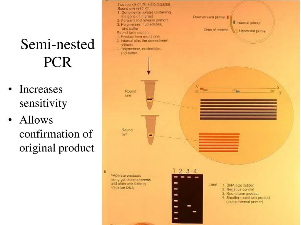 Semi-nested PCR