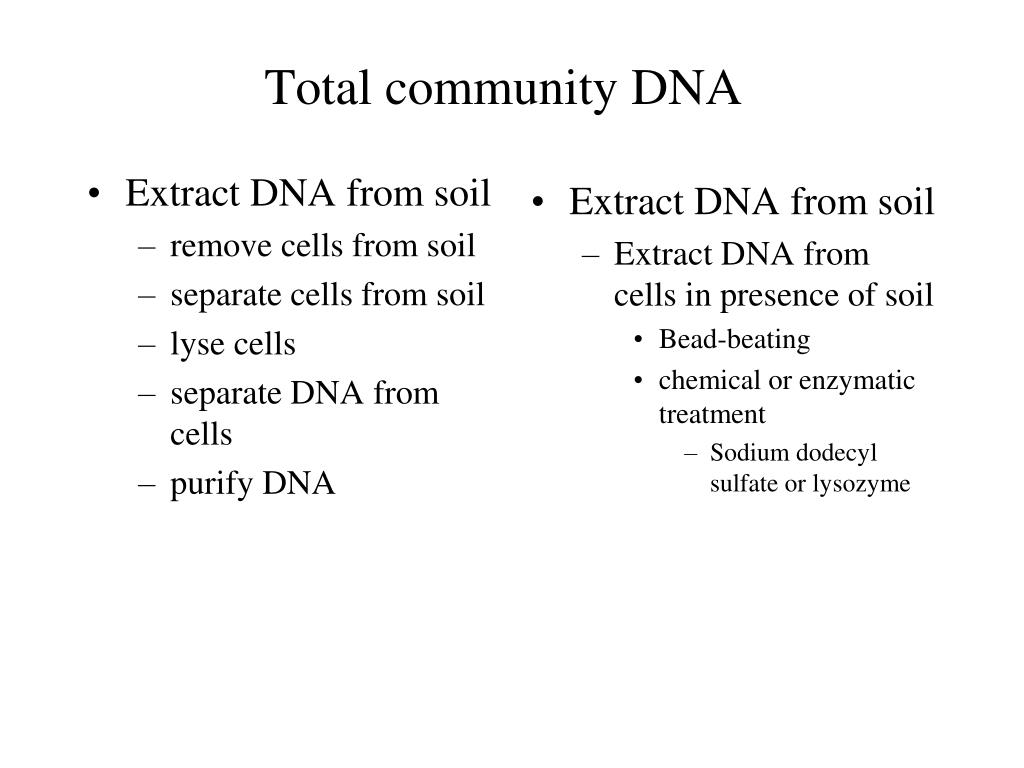 Extract DNA from soil