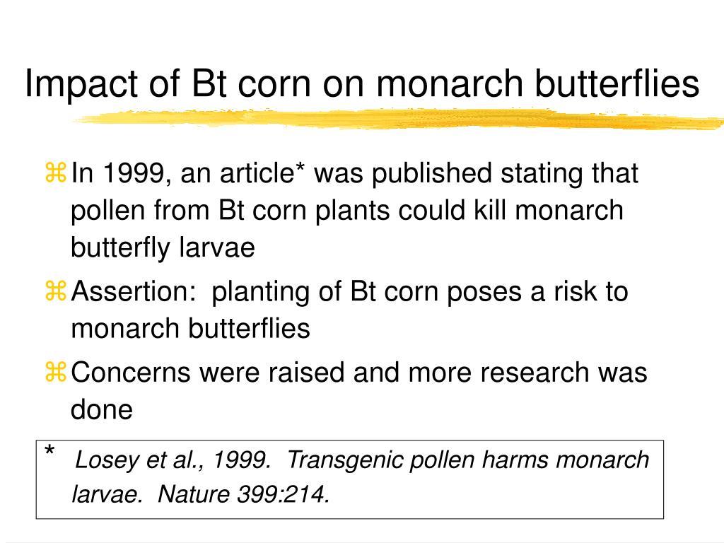 Impact of Bt corn on monarch butterflies