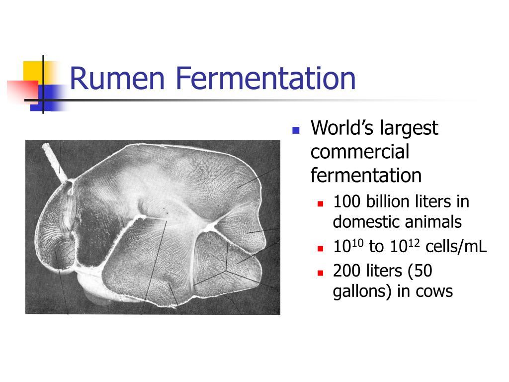 Rumen Fermentation