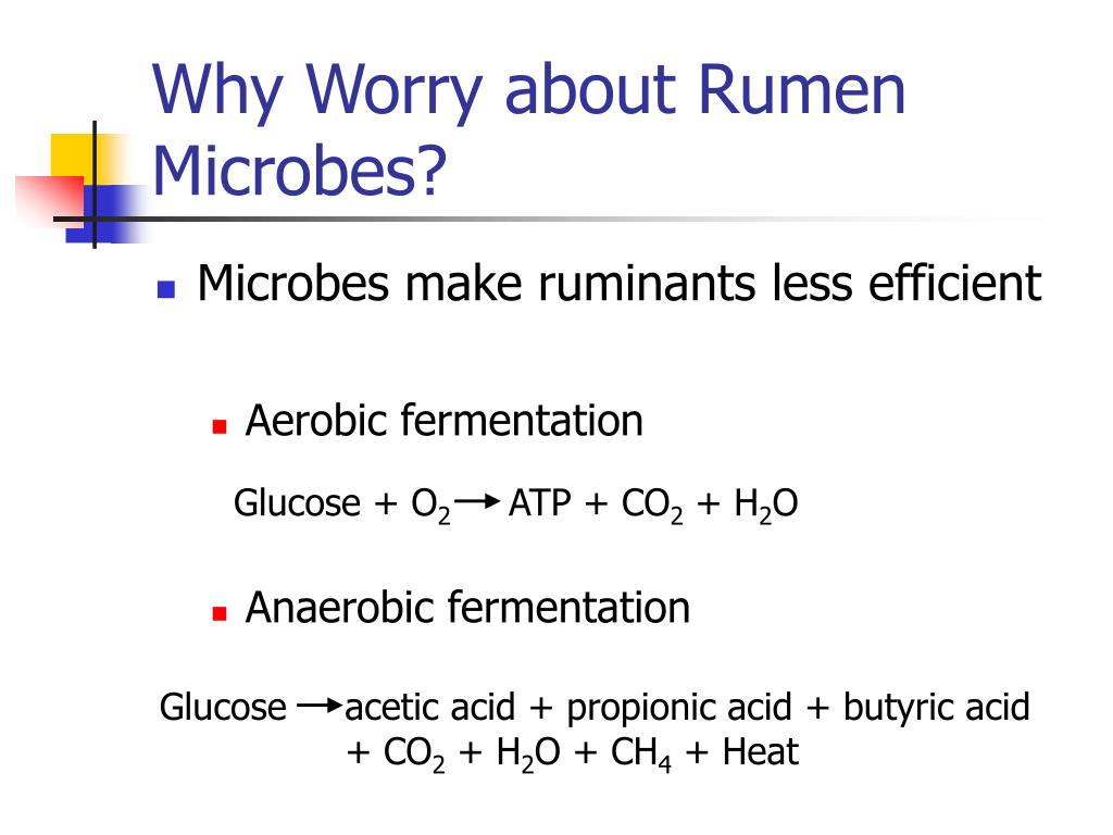 Why Worry about Rumen Microbes?