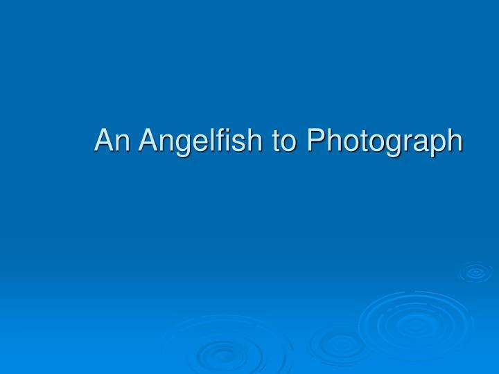 An Angelfish to Photograph