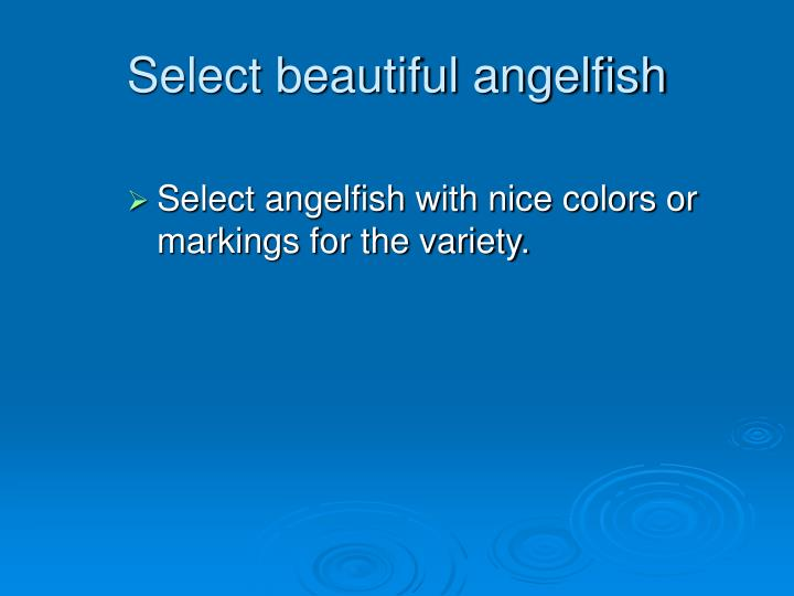 Select beautiful angelfish