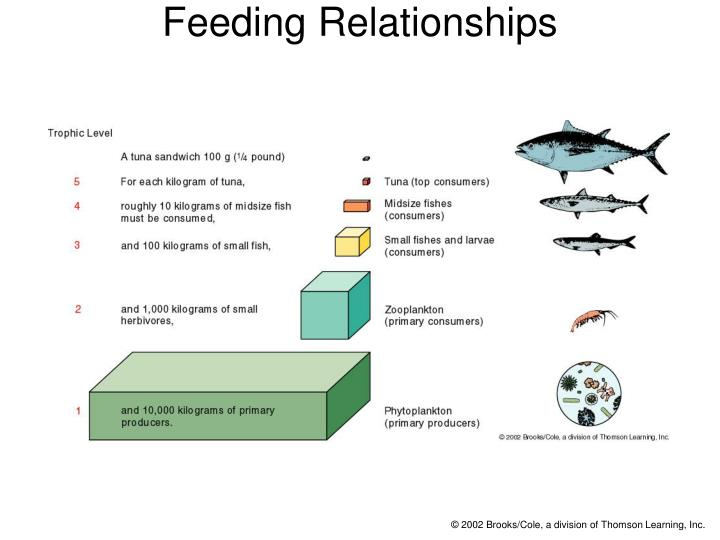 Feeding Relationships
