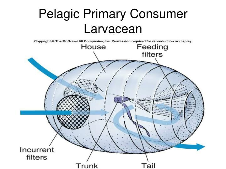 Pelagic Primary Consumer