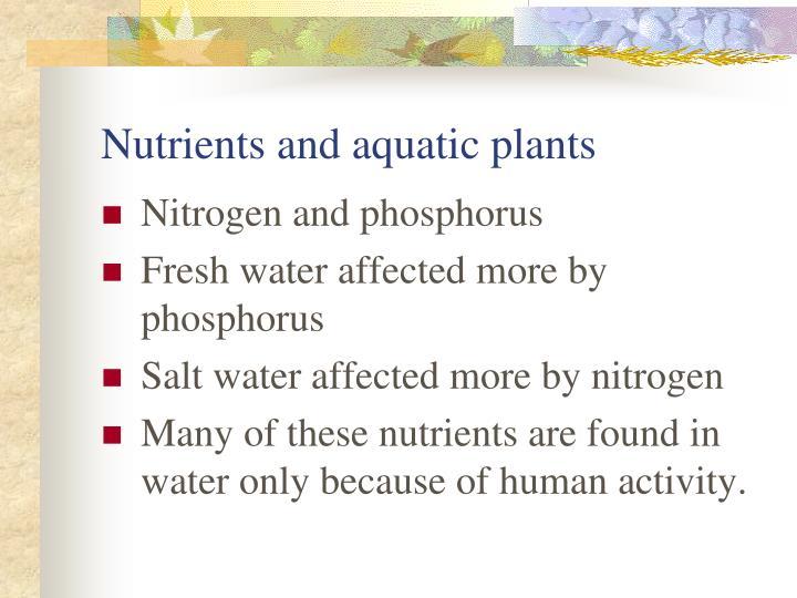 Nutrients and aquatic plants