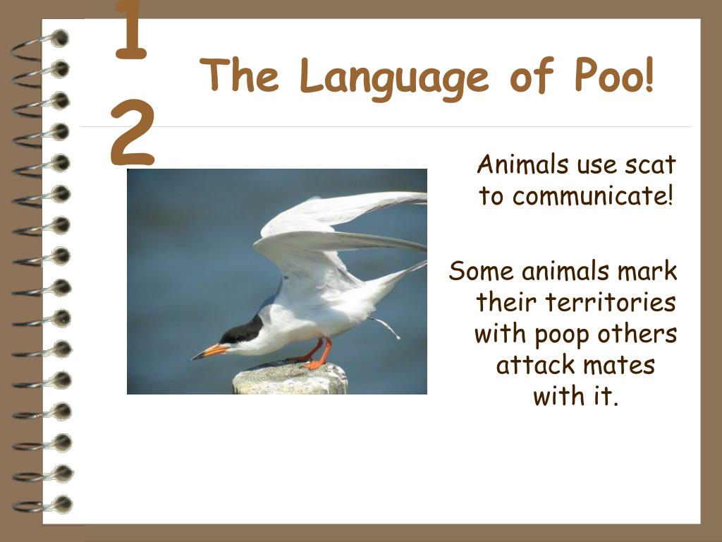 The Language of Poo!