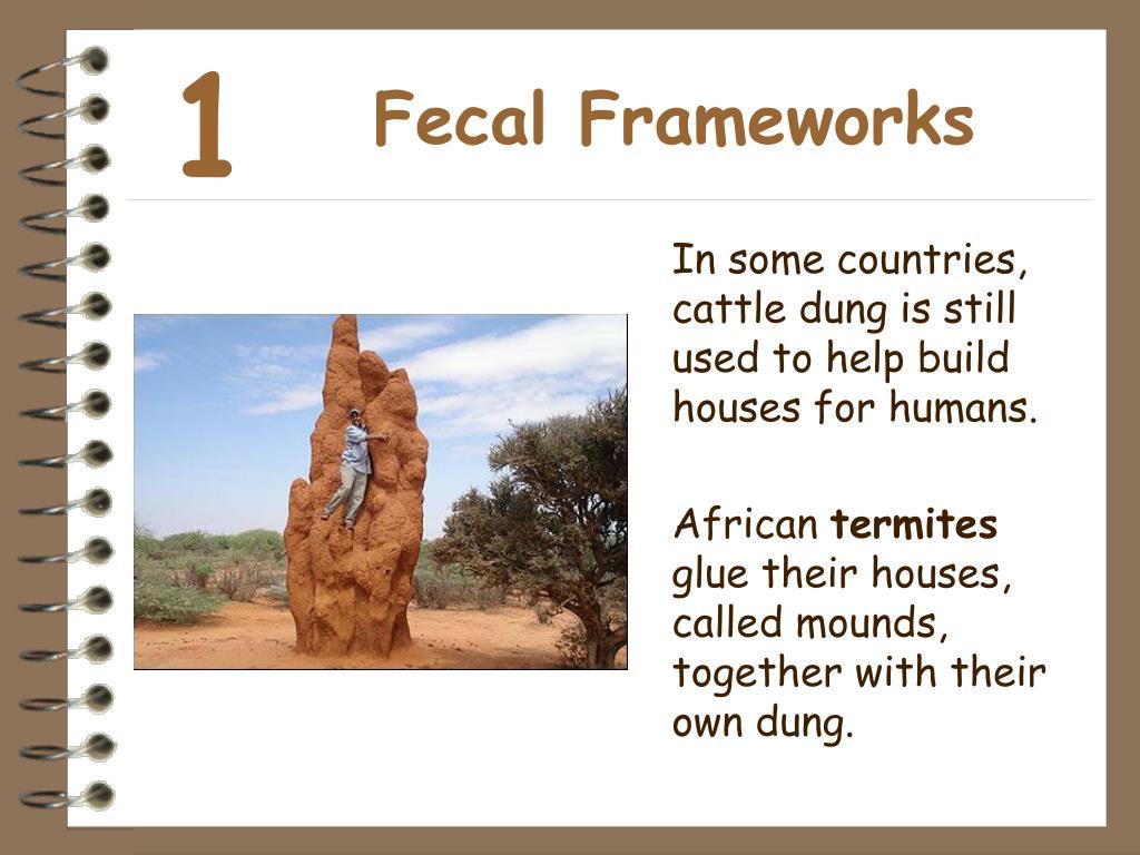 Fecal Frameworks