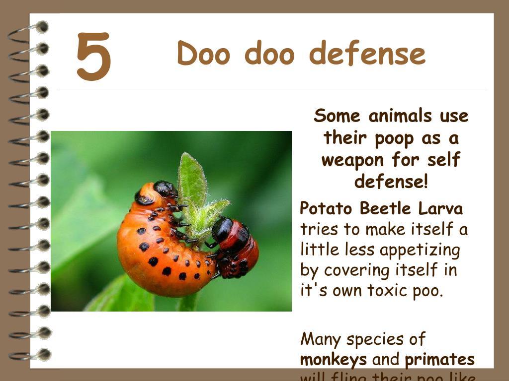 Doo doo defense