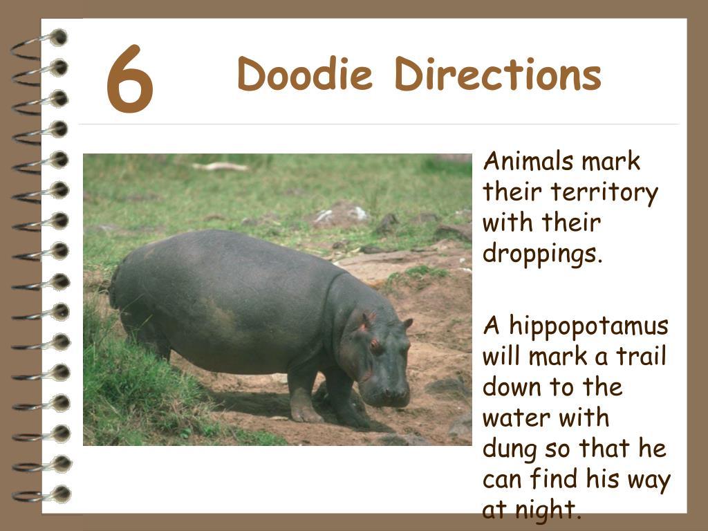 Doodie Directions