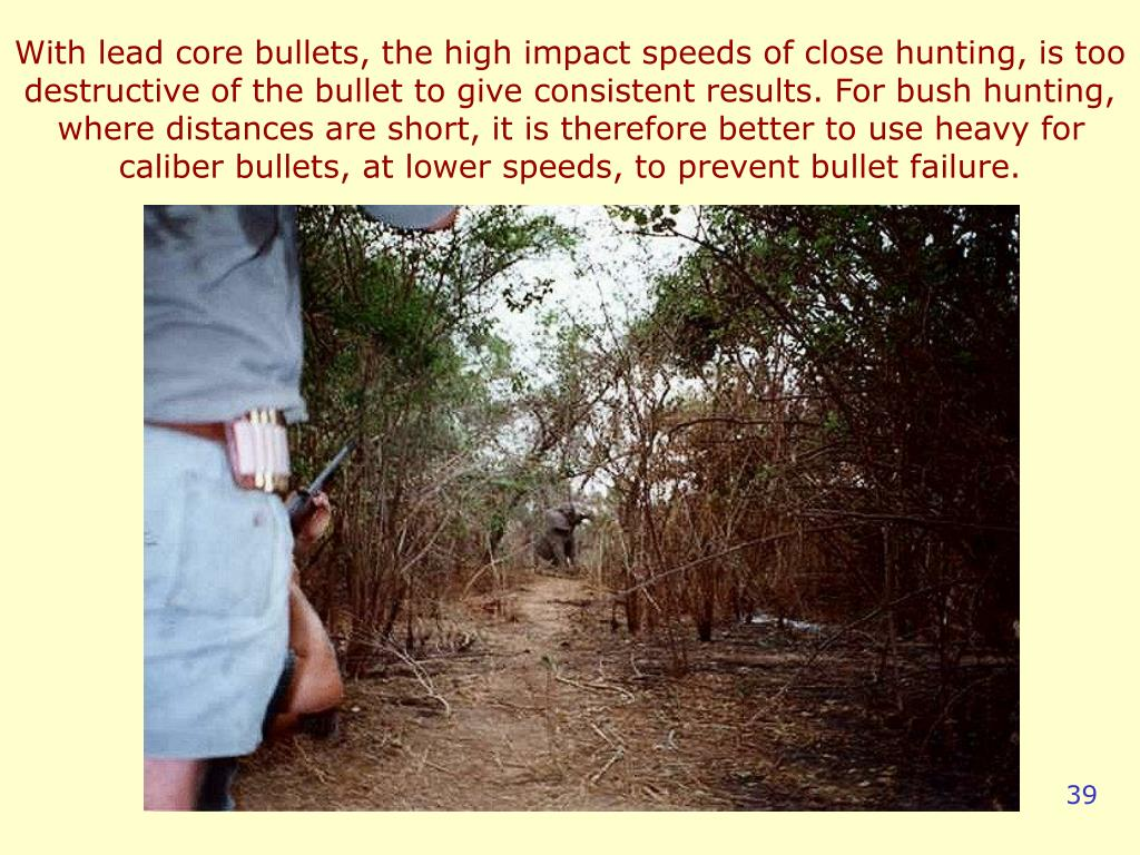 With lead core bullets, the high impact speeds of close hunting, is too destructive of the bullet to give consistent results. For bush hunting, where distances are short, it is therefore better to use heavy for caliber bullets, at lower speeds, to prevent bullet failure.