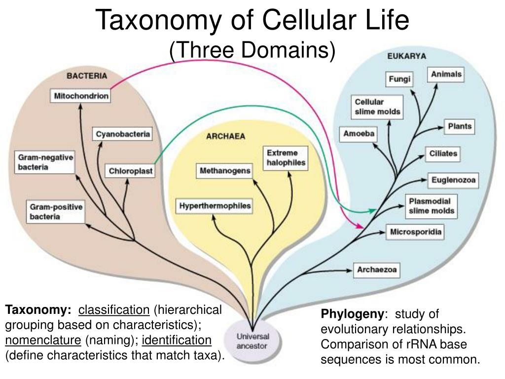 Taxonomy of Cellular Life