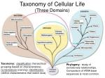 taxonomy of cellular life three domains