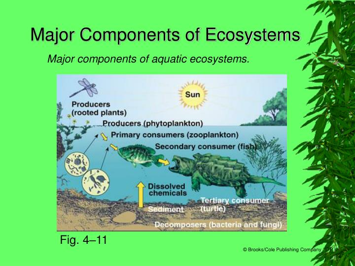 Major Components of Ecosystems