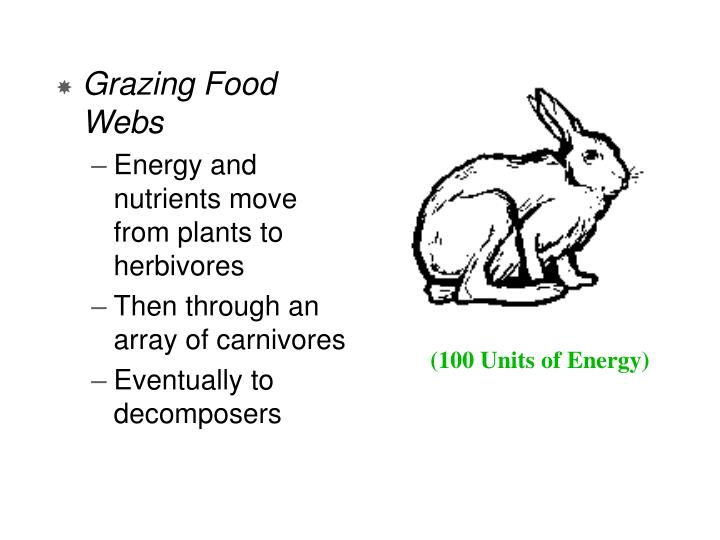 Grazing Food Webs