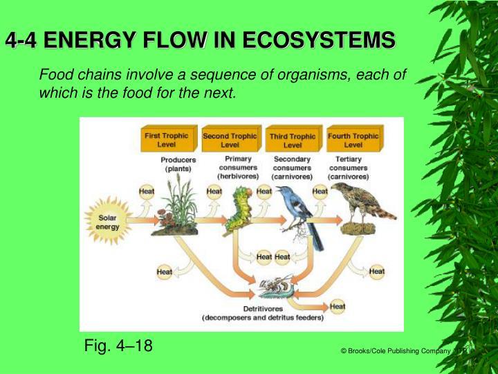 4-4 ENERGY FLOW IN ECOSYSTEMS