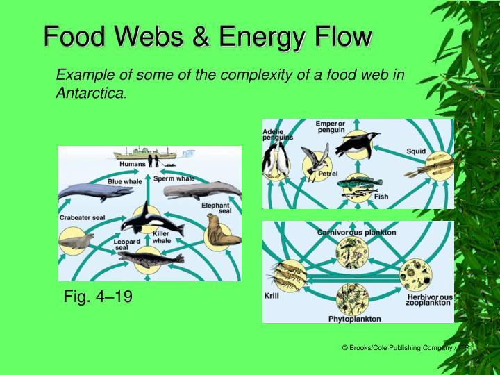 Food Webs & Energy Flow