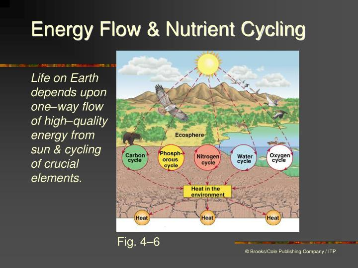 Energy Flow & Nutrient Cycling