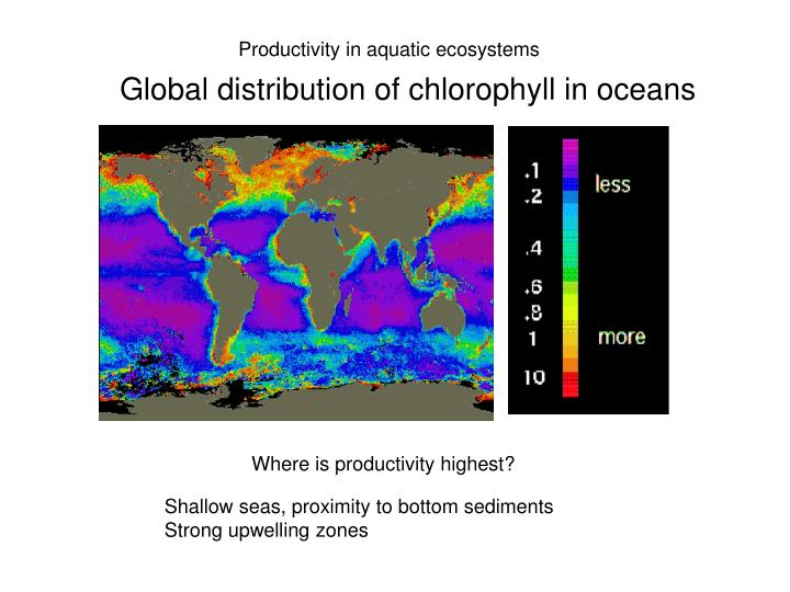 Productivity in aquatic ecosystems