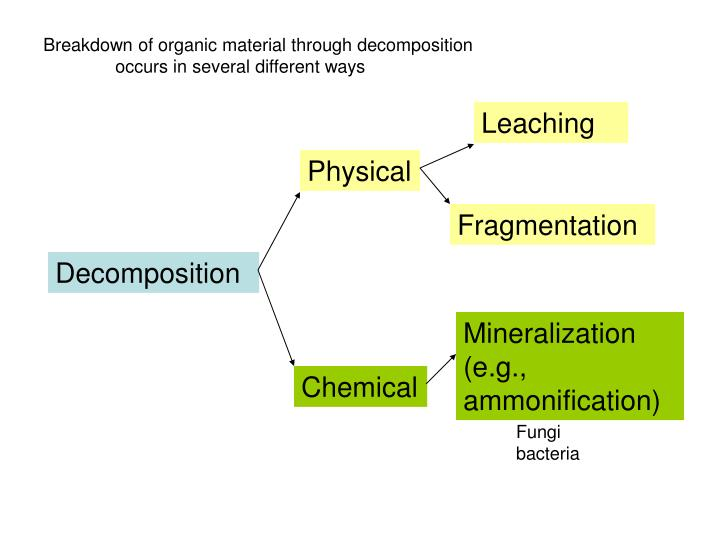 Breakdown of organic material through decomposition
