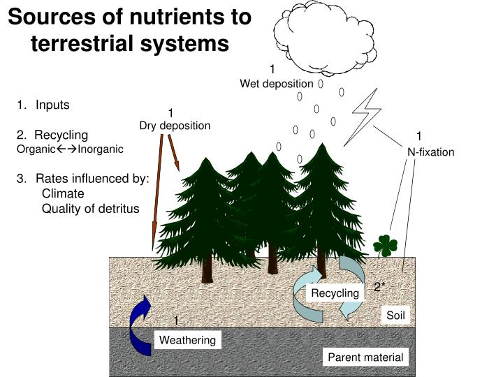 Sources of nutrients to terrestrial systems
