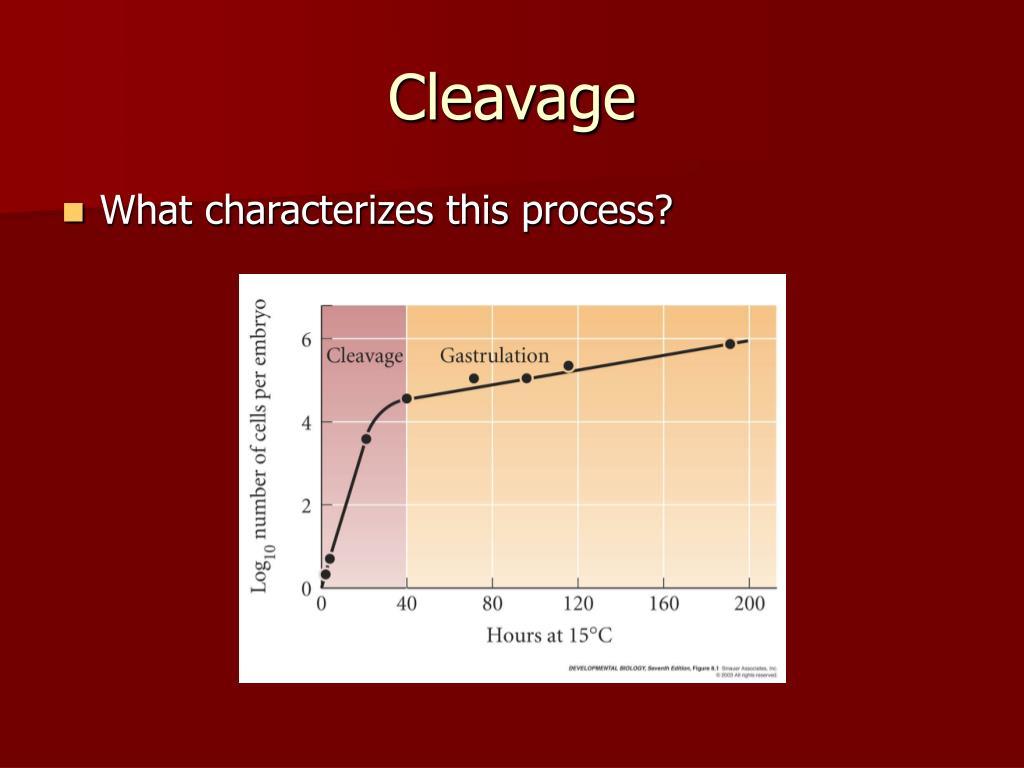 Cleavage