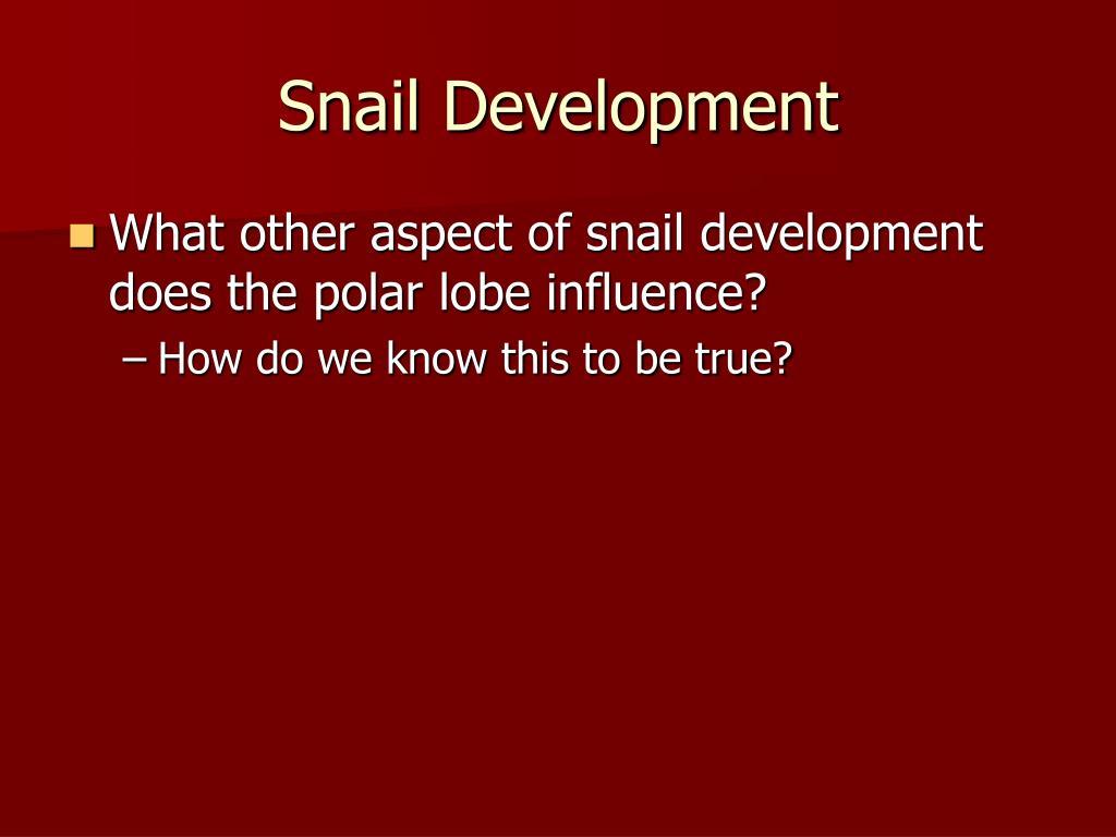 Snail Development