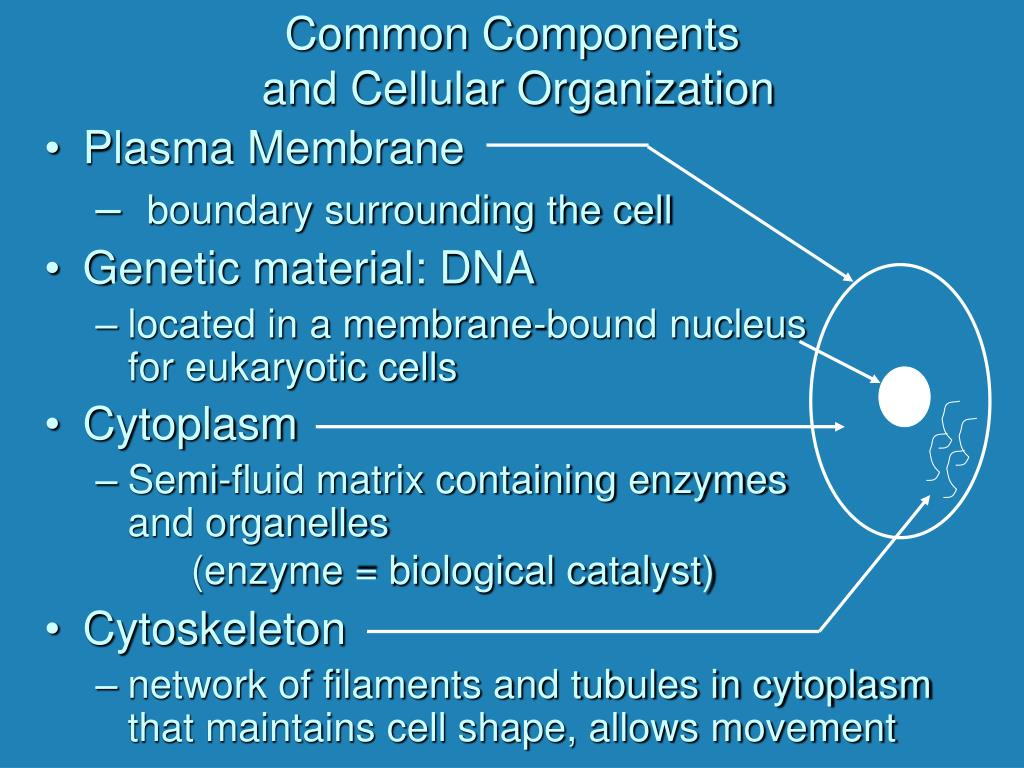 Common Components