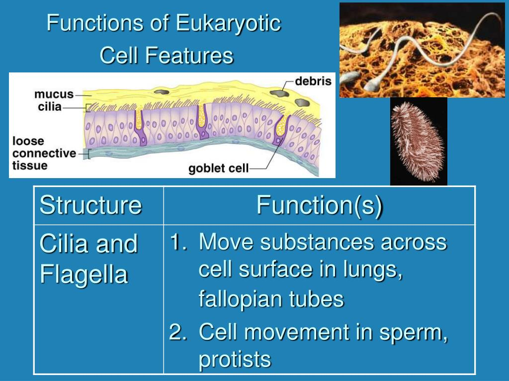 Functions of Eukaryotic