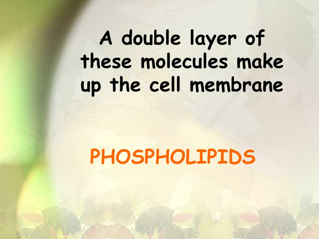 A double layer of these molecules make up the cell membrane