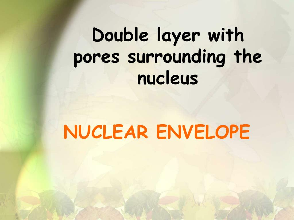 Double layer with pores surrounding the nucleus