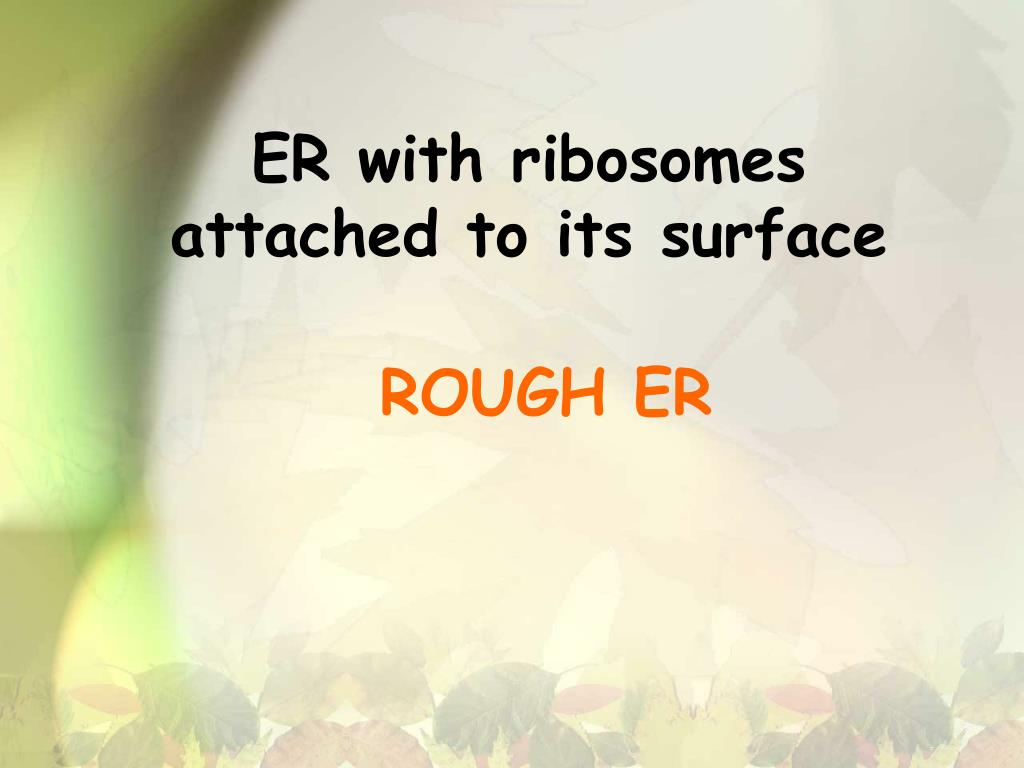 ER with ribosomes attached to its surface