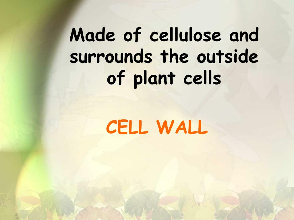Made of cellulose and surrounds the outside of plant cells