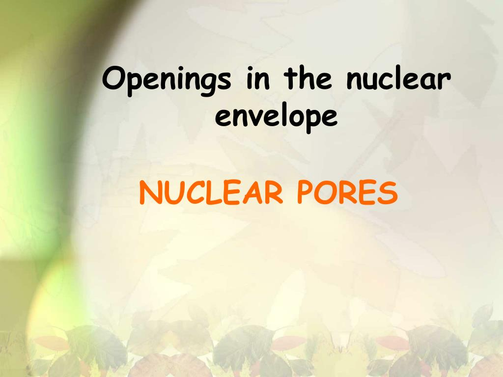 Openings in the nuclear envelope