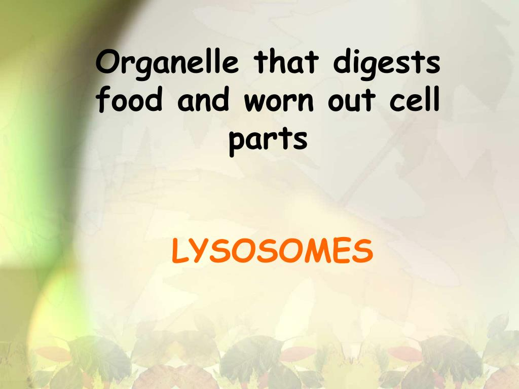 Organelle that digests food and worn out cell parts