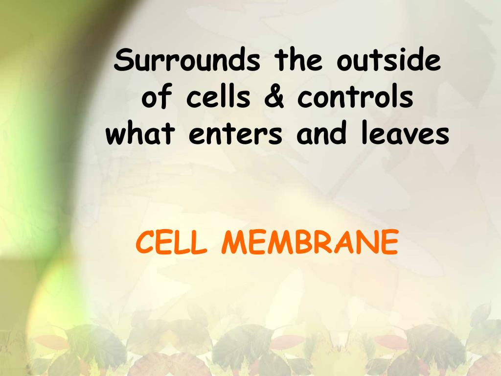 Surrounds the outside of cells & controls what enters and leaves