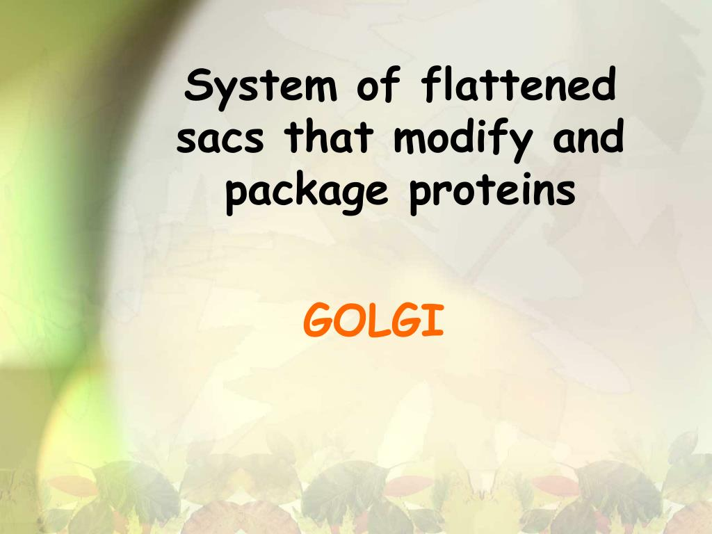 System of flattened sacs that modify and package proteins
