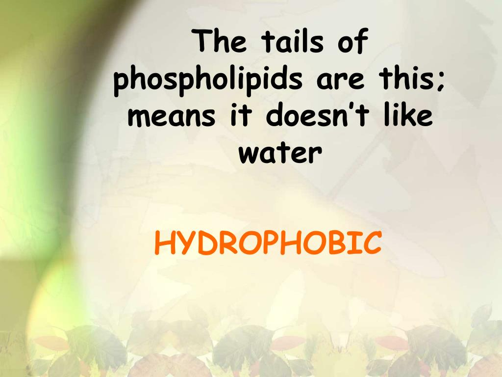 The tails of phospholipids are this; means it doesn't like water