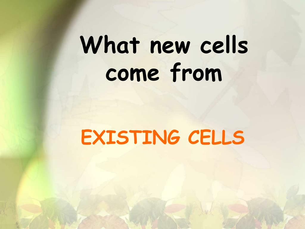What new cells come from