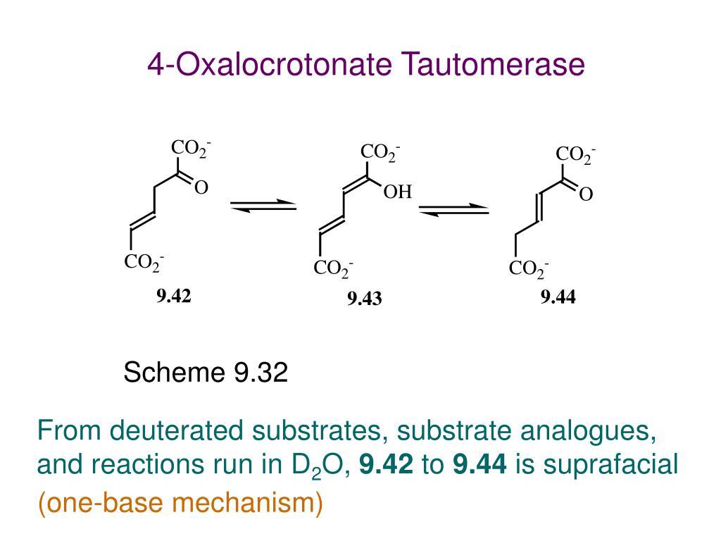 4-Oxalocrotonate Tautomerase