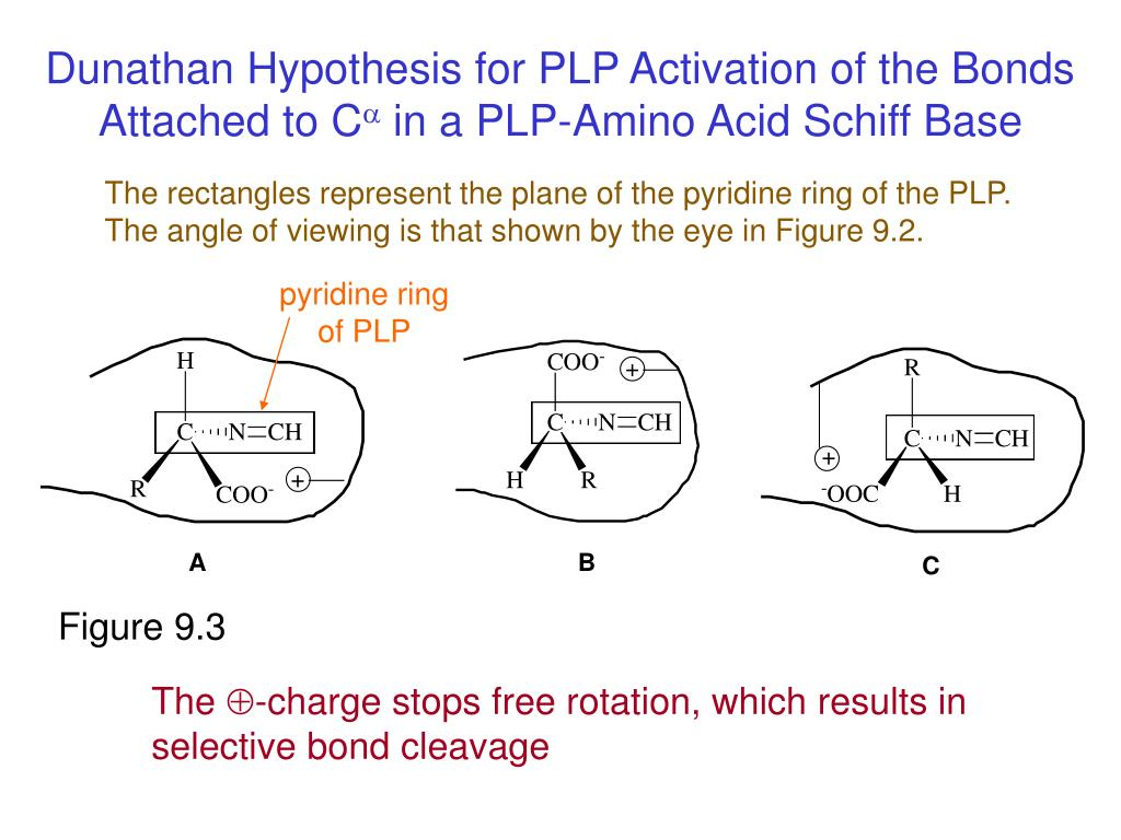 Dunathan Hypothesis for PLP Activation of the Bonds Attached to