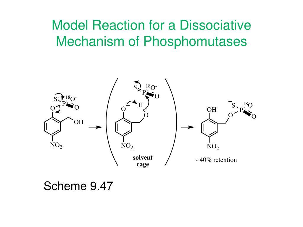 Model Reaction for a Dissociative Mechanism of Phosphomutases