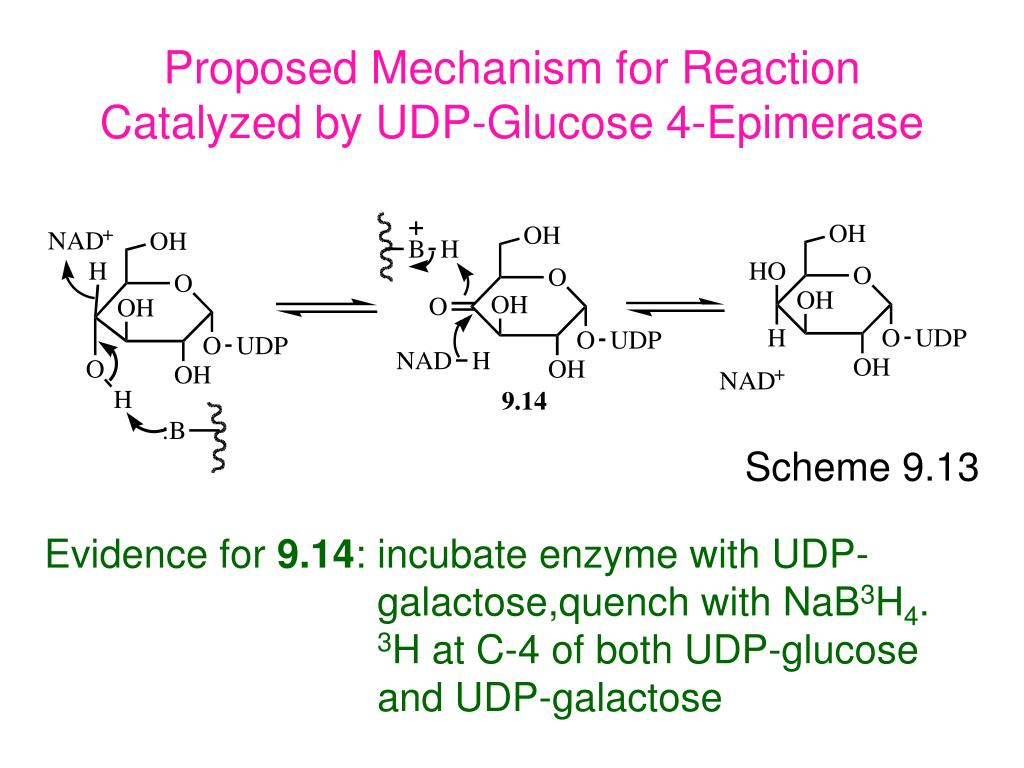 Proposed Mechanism for Reaction Catalyzed by UDP-Glucose 4-Epimerase