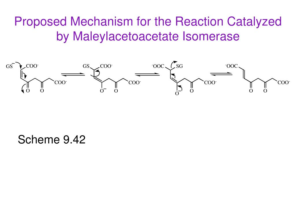 Proposed Mechanism for the Reaction Catalyzed by Maleylacetoacetate Isomerase
