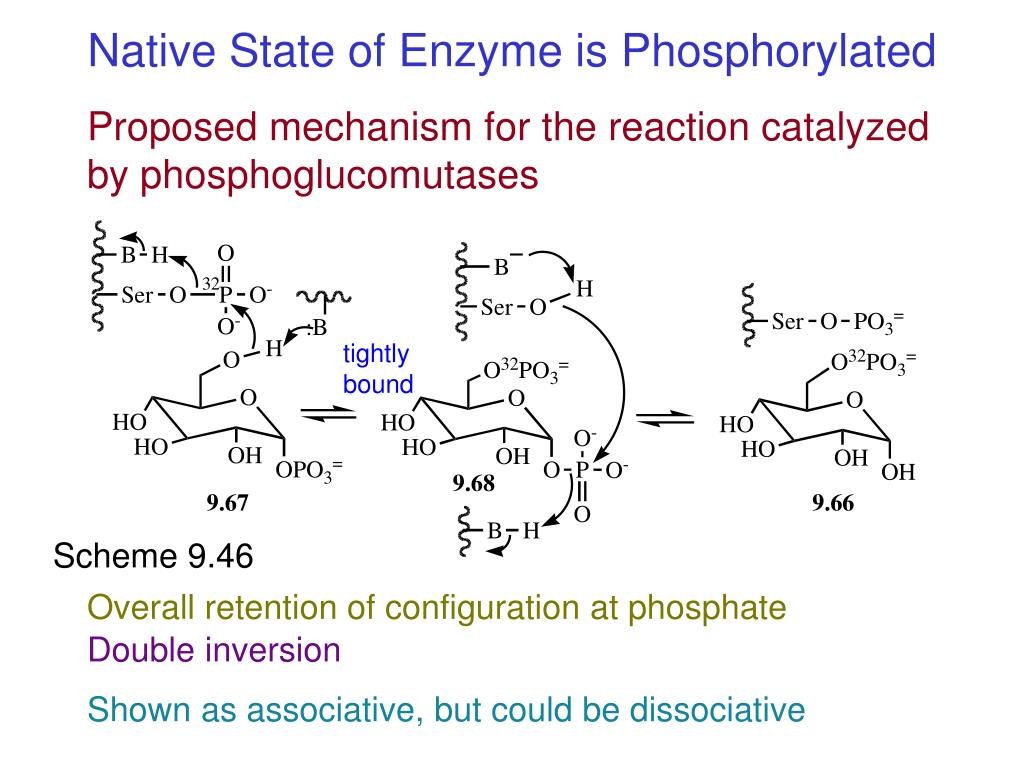 Native State of Enzyme is Phosphorylated