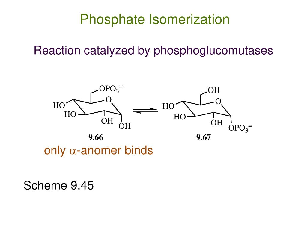 Phosphate Isomerization