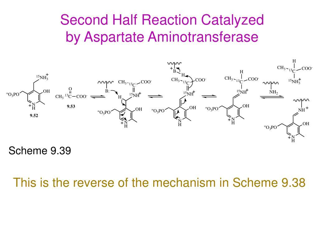 Second Half Reaction Catalyzed by Aspartate Aminotransferase